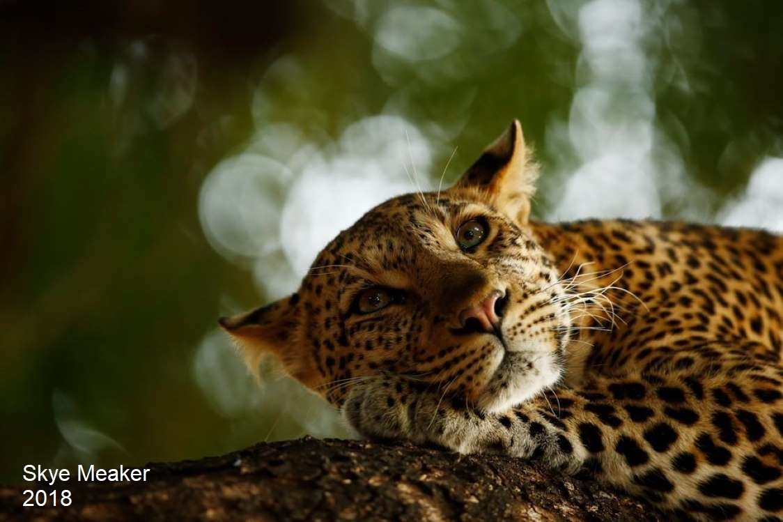 Stunning Wildlife Photos