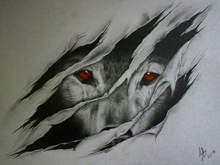 Wolf Drawings, Speant Like 16 Hours On Them All Together