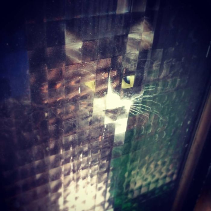 11 Times People Spotted Pixel Cats In Real Life And Just Had To Share