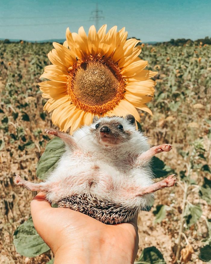 This Lovely Smiling Porcupine Has 1.5 Million Followers On Your Instagram And We Are Sure You Will Be One Of Them Too