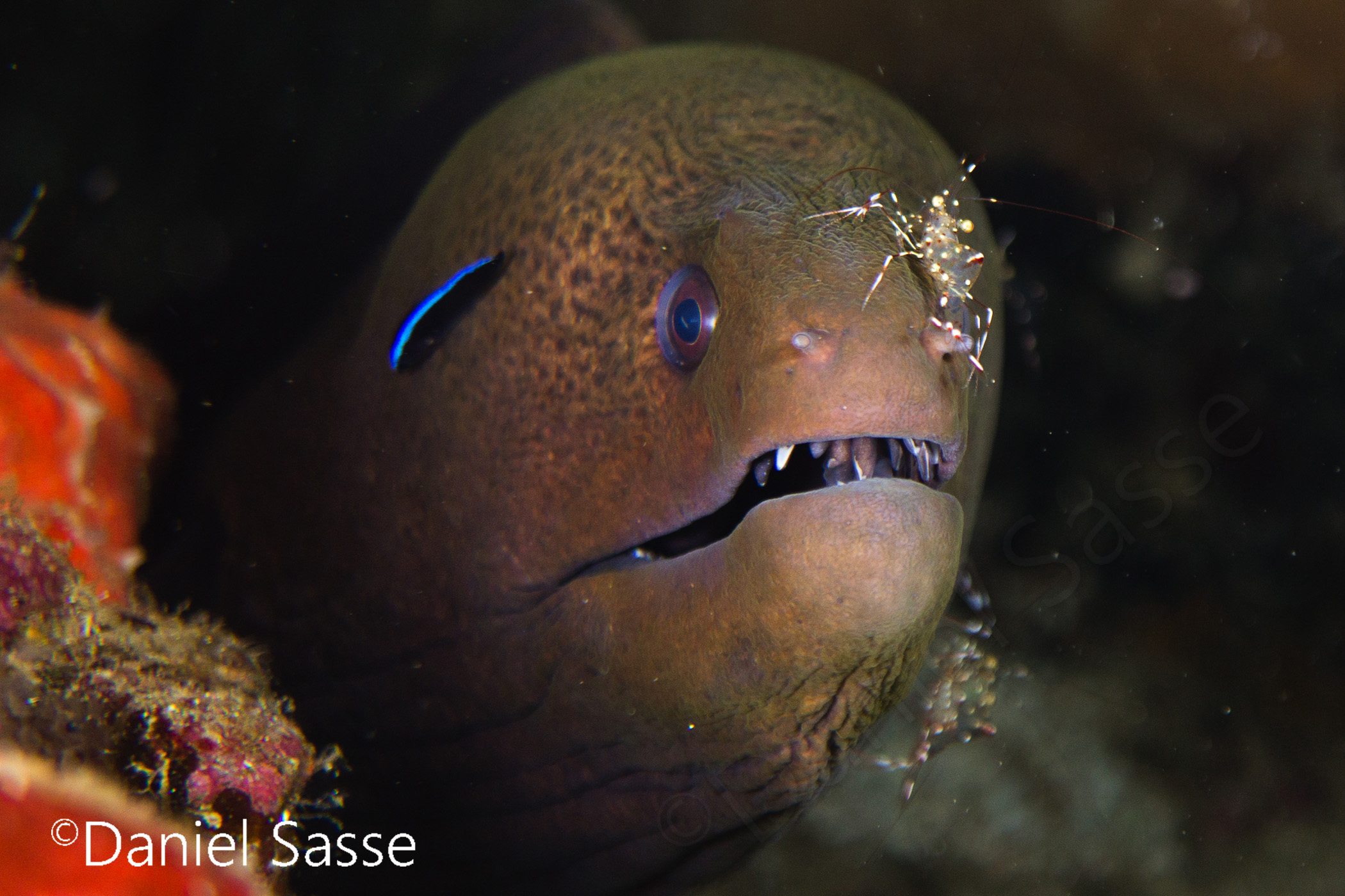 I Spent Many Hours Scuba Diving To Photograph Moray Eels On Cleaning Stations.