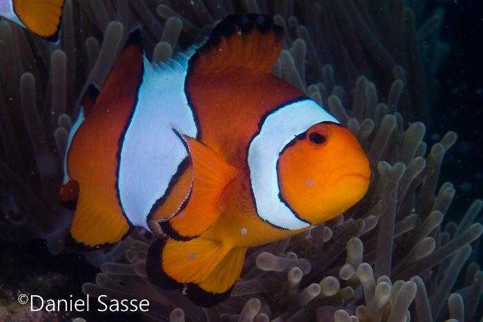 Nemo #14