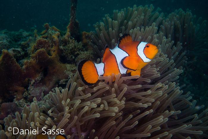 Nemo #15