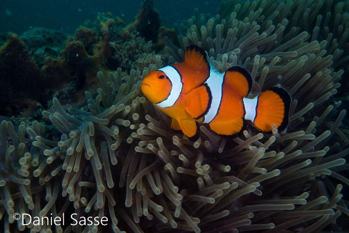Nemo #16