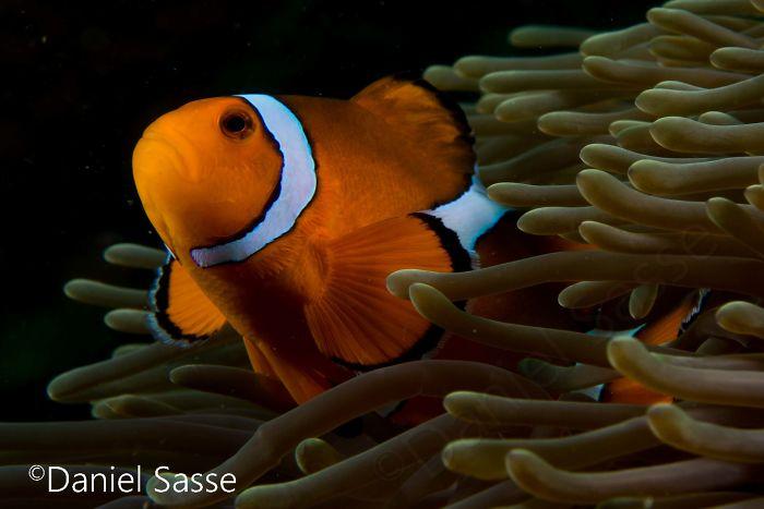 Nemo #4