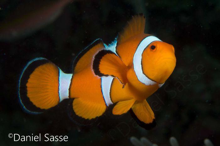 Nemo #5