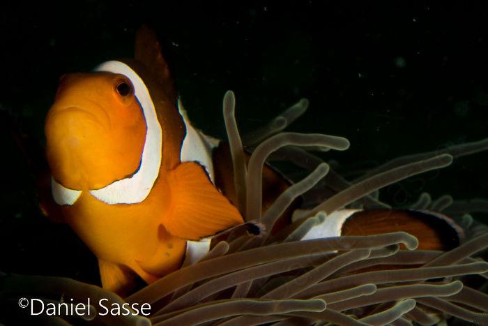 Nemo #17