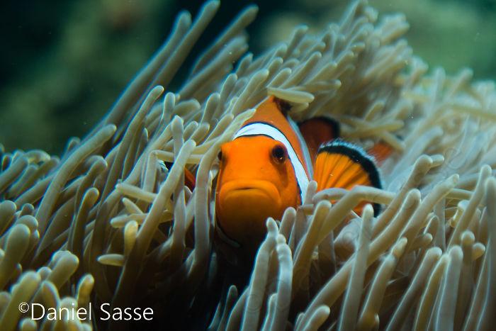 Nemo #11