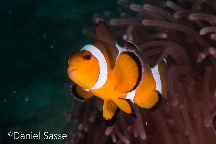 Nemo #12