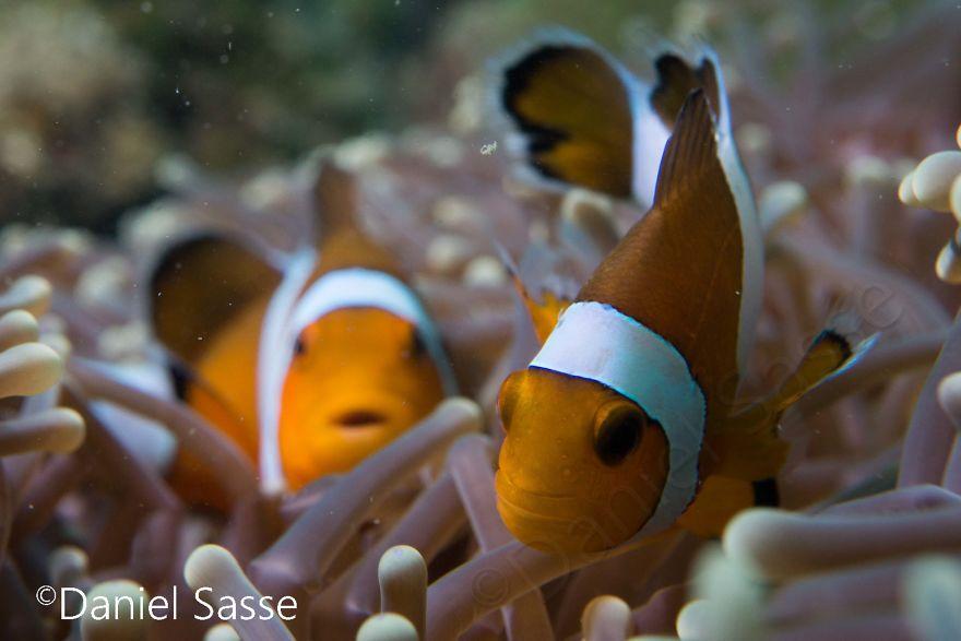 Nemo #3