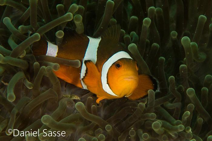 Nemo #13