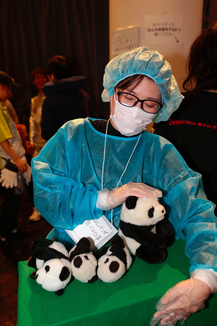 Zoo Worker Lining Up Baby Pandas