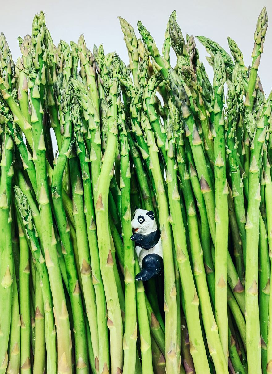 Homemade Bamboo Forest
