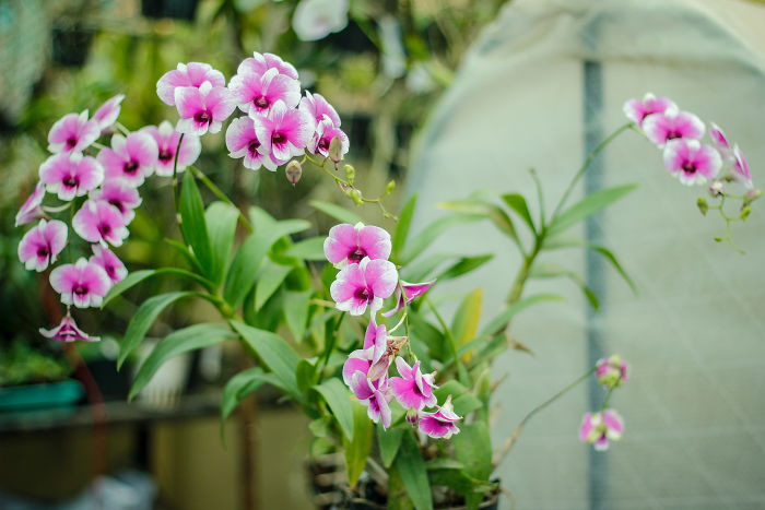 I Have Been Photographing Orchids Since The Day I Got My First Camera