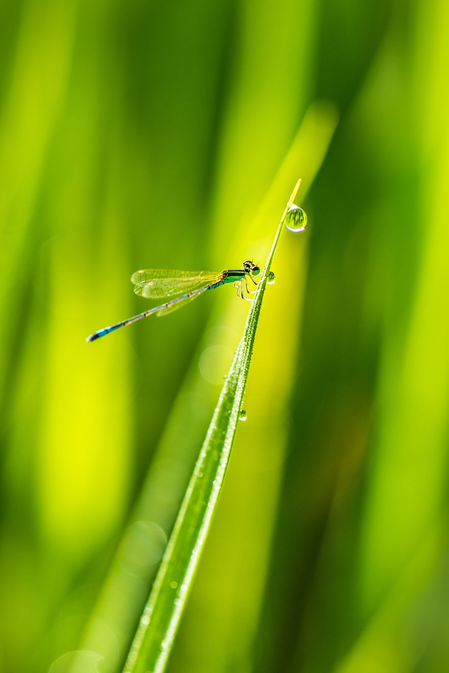 One Drop For A Life, Saw Fabian, Myanmar