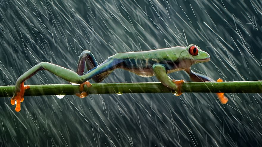 Rainy Day, Hendy Mp, Indonesia