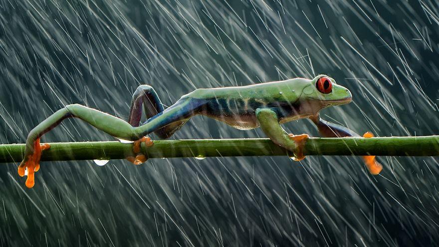 Rainy Day, Hendy Mp, Indonesia