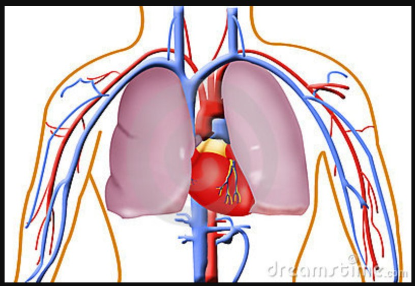 Simple Test To See If You Have Healthy Lungs, Heart And Circulatory System That You Can Do Only 1 Minute