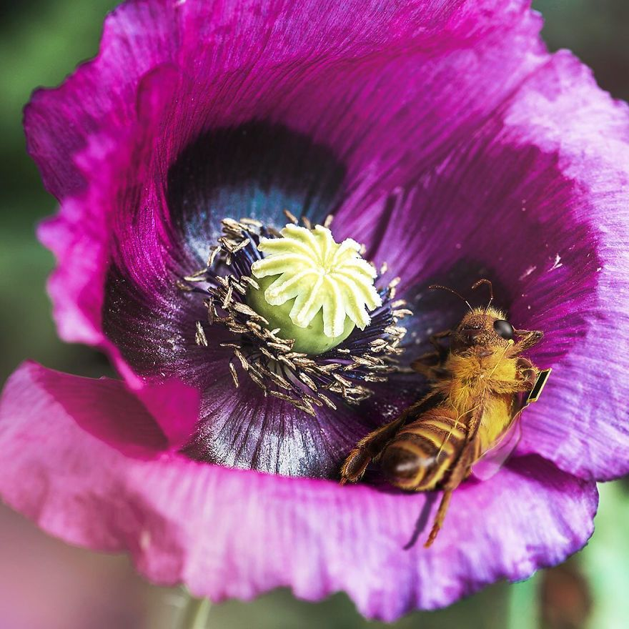 The World's First Influential Bee Is An Activist For The Preservation Of Its Species