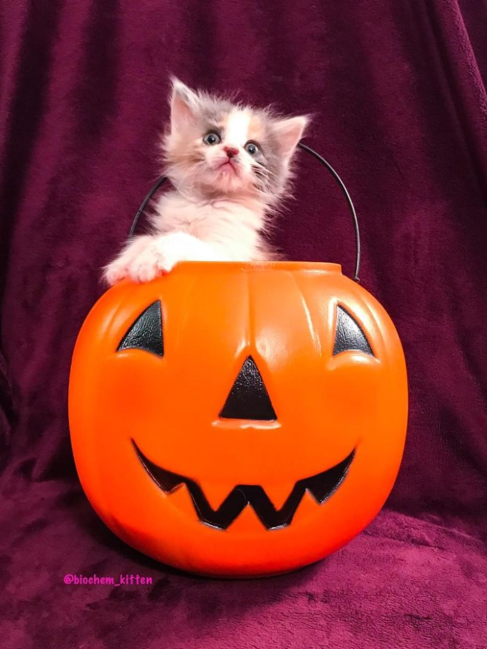 Foster Kitty Gives The Cutest Smile During A Photoshoot And It Takes Over The Internet