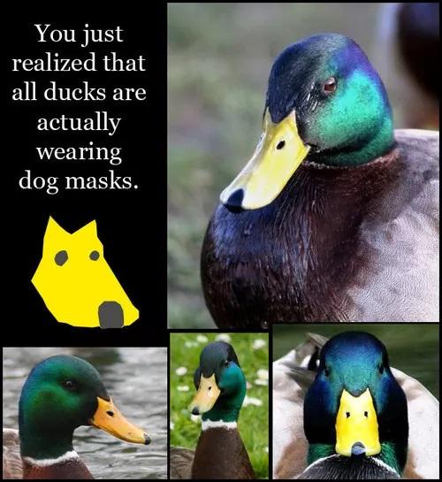 all-ducks-wear-dog-masks-21525-1282659886-6-5da6290db23c2.jpg