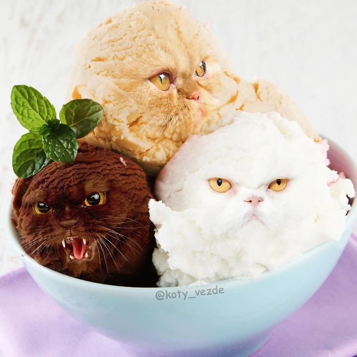 Someone Imagines What Everything Would Look Like If It Had A Cat's Face And The Result Is Funny Yet Disturbing