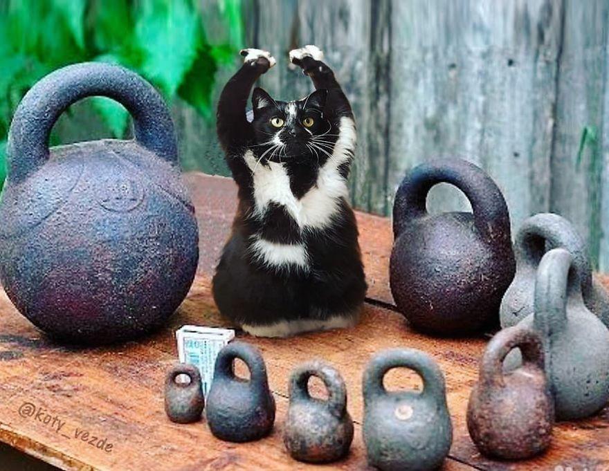 Animals-Photoshopped-Cats-Koty-Vezde