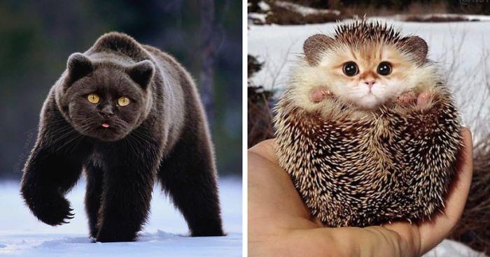 Weird Faces Of Animals 9