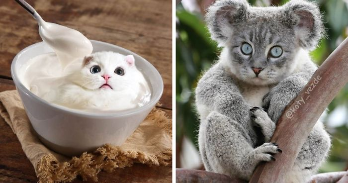 This Account Photoshops Cats Into Hilarious Creatures (116 Pics)