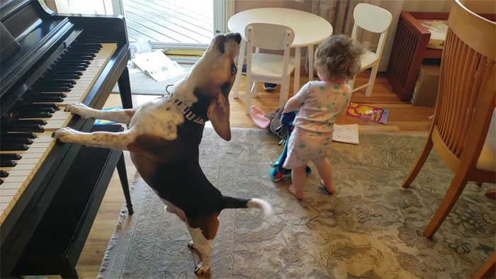 Man Accidentally Captures A Video Of His Baby Daughter Dancing To Their Dog Playing The Piano