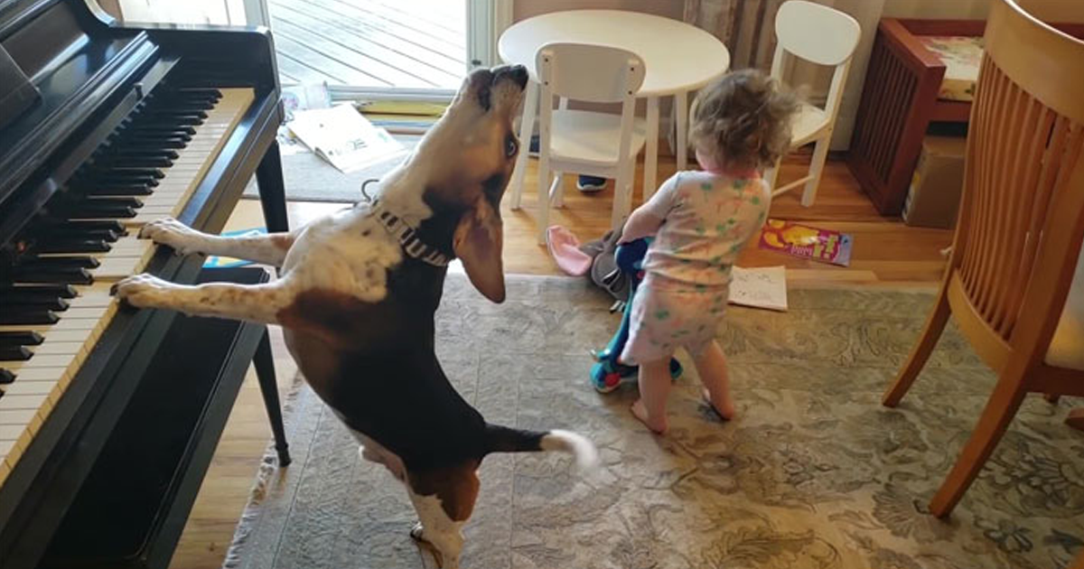 Rescue Dog Plays The Piano For A Dancing Baby, And It's As Cute As It Sounds