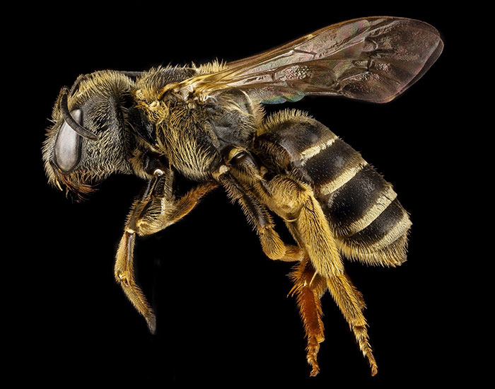 Bees Are Now Officially Declared To Be The Most Important Beings On Earth