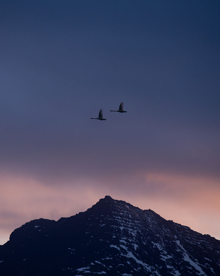 Wild Geese Flying Over A Mountain Peak
