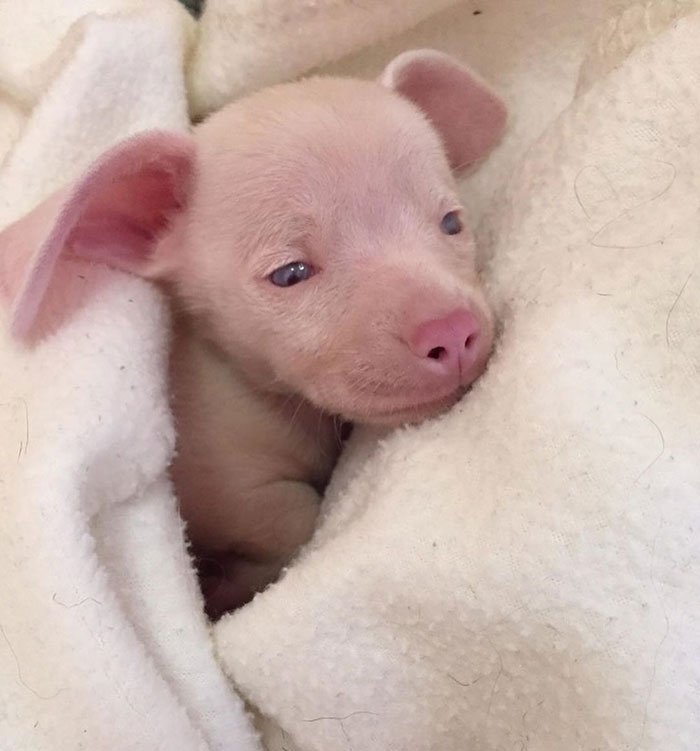 This Deaf And Blind Puppy Named Piglet Shows Kids How To Deal With Differences