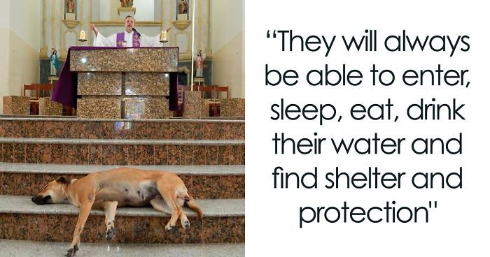 The Priest Invites Stray Dogs Inside The Church So They Can Be Adopted