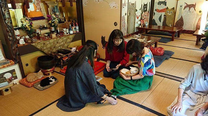 There Is A Cat Temple In Japan And Its Monks Are The Cutest