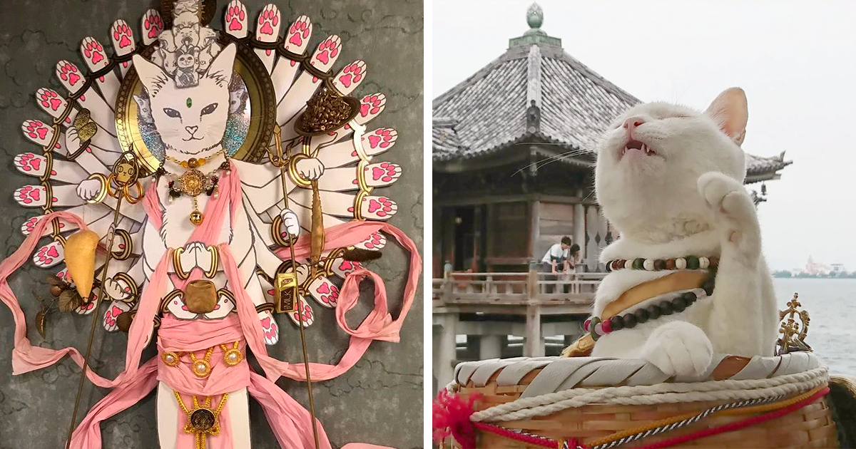 There Is A Cat Shrine In Japan And Its Monks Are The Cutest