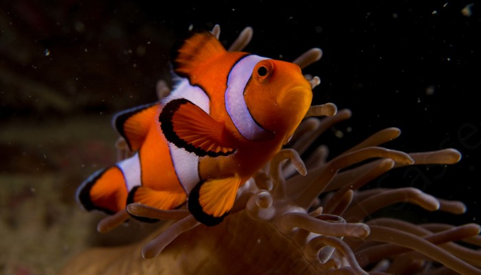 My 17 Pictures Of Nemo In Real Life