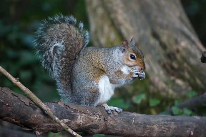 Hundreds Of Trees Become Seedlings Every Year Because Of Squirrels Forgetting Where They Buried Their Food