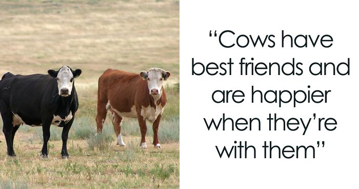 42 Interesting Animal Facts That You Can Throw Out In Casual Conversations