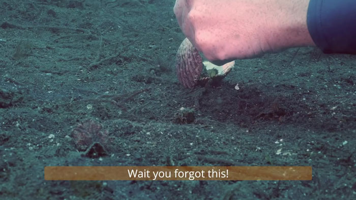 Diver Convinces Baby Octopus To Give Up His Plastic Cup In Exchange For A Shell