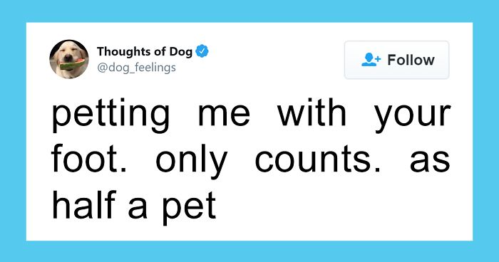 30 Of The Funniest Dog Thoughts That Dog Owners Understand Too Well (New Pics)