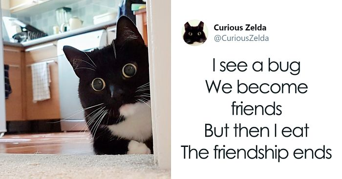This Funny Cat Named Zelda Takes Over Twitter With Her Funny Posts (45 New Pics)