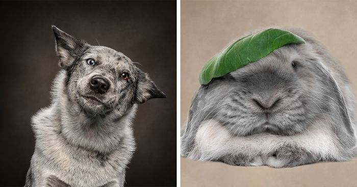 I Made Funny Noises At Animals And Captured Their Funny Expressions (21 Pics)
