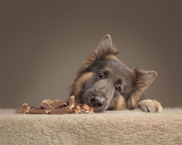 I Captured Dogs And Their Relationship With Food (15 Pics)