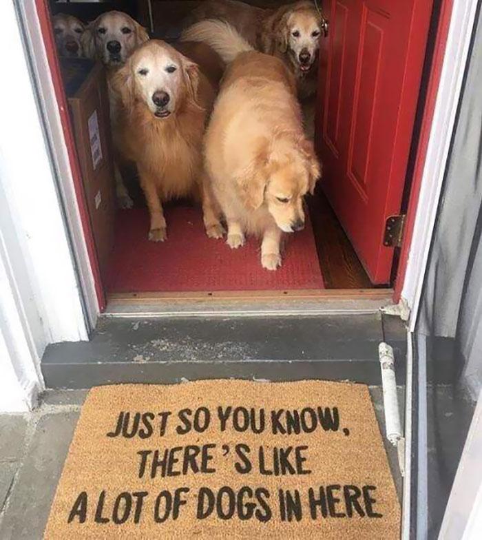 Honest Doormat