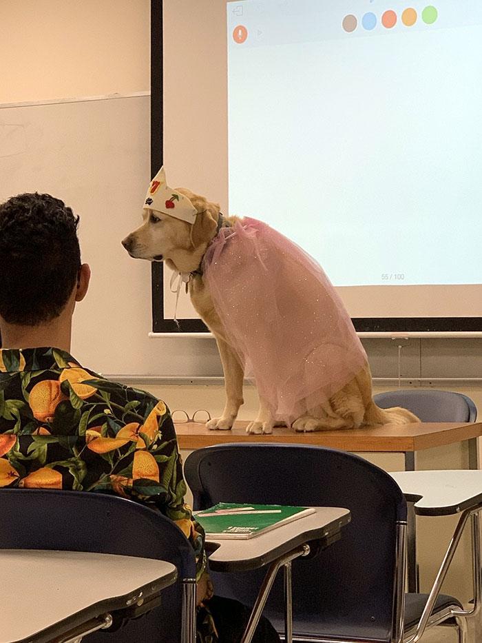 El perro del profesor