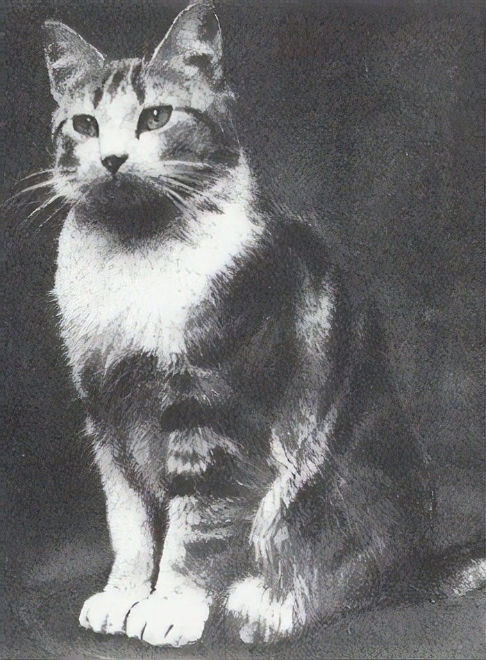 Faith, The Church Cat Of St. Augustine's Church In London Who Protected Her Offspring From An Air Raid