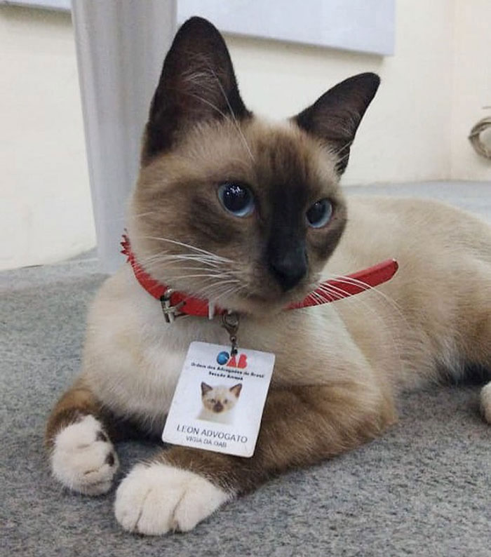 Dr. Leon Advogato, The Cattorney Who Inspired The Launch Of An Animal Rights Institute