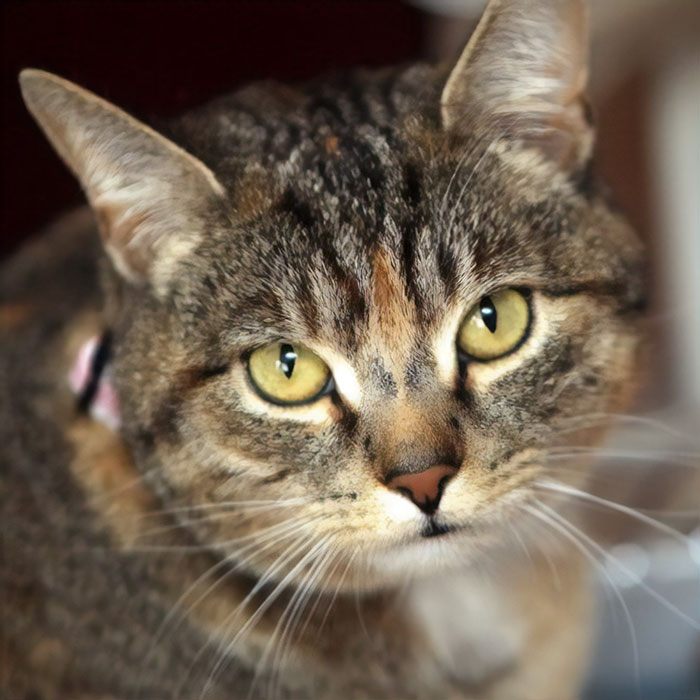 Missy, A Cat Who Sensed Cancerous Cells In Her Owner's Body